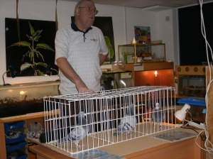 Ian McKay with some of his lovely racing pigeons.