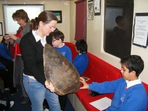 The inspirational sea turtle shell.