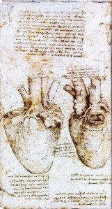 da Vinci, study of the heart of an ox, 1513
